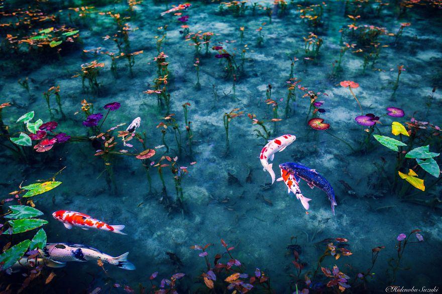 fotos naturaleza japón
