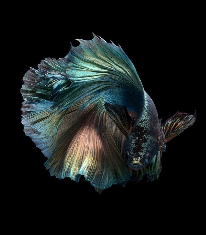 fotos peces con personalidad