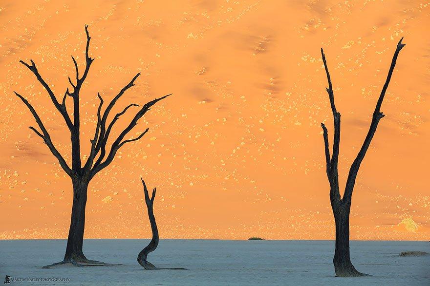 Acacias eriolobas en Namibia