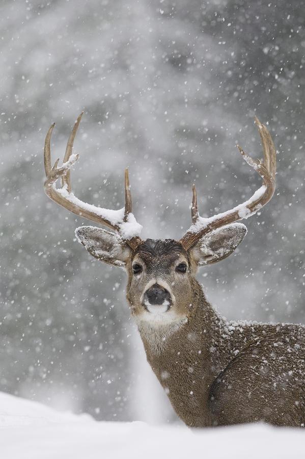 fotos animales en la nieve